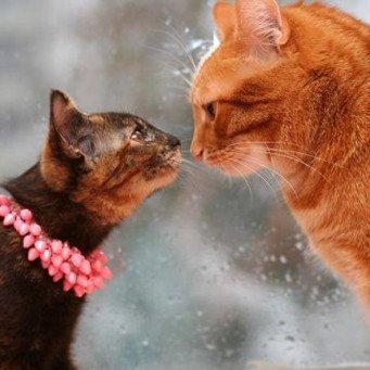 как познакомиться с кошкой