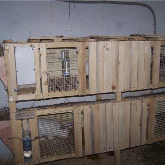 Маточники для кроликов своими руками видео 948
