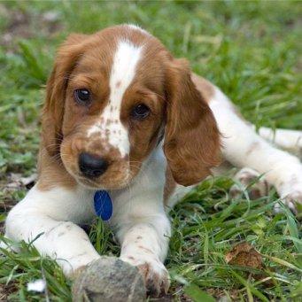 Какую собаку лучше завести в городской квартире?
