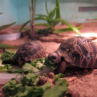 Как сделать террариум сухопутной черепахи своими руками фото 422