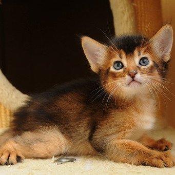 Как котенку сделать родословную 153