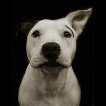 Чем лечить геморрой у собаки