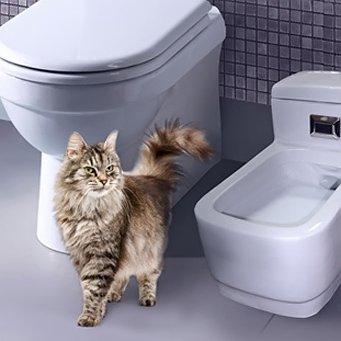 куда лучше ставить лоток для кота
