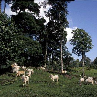 Договор аренды скота: бланк, образец 2019