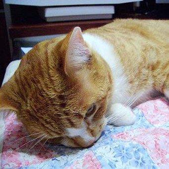 Как кошки переносят наркоз