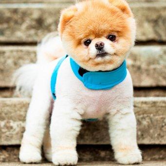 фото самые маленькие породы собаки