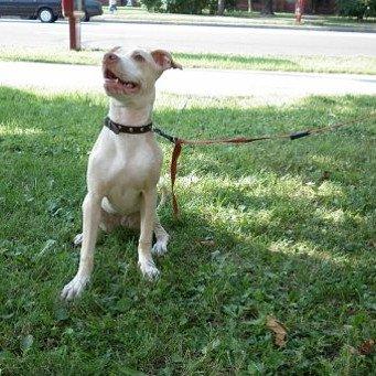 Как приучить собаку к улице