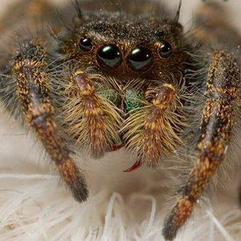 Картинки тарантула большого
