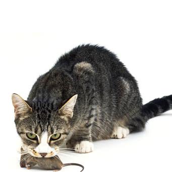 Как ловить котов руками