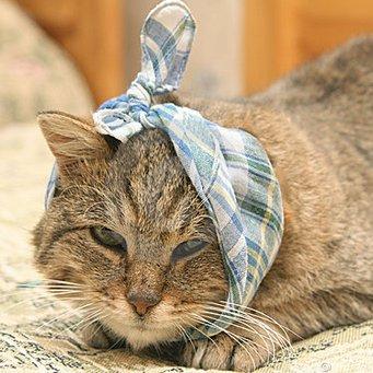 Чем можно промывать ухо коту