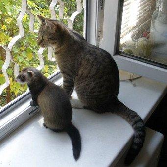 Могут ли кот с кошкой ужиться