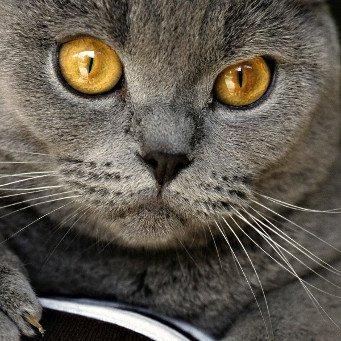 Глисты у кота в глазах