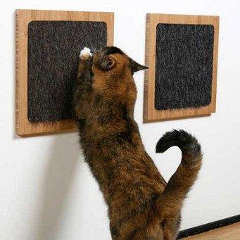 Как отучить кота царапать меня