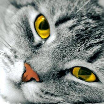 Желтые глаза у рыжего кота