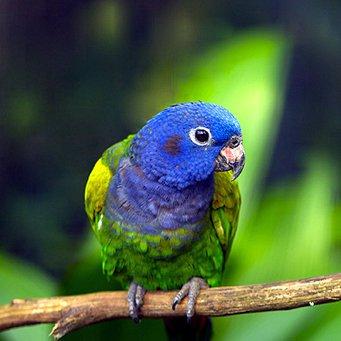 Клюв у попугая цвет