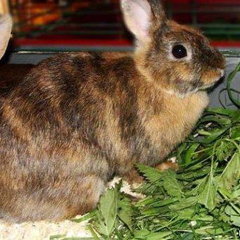 можно ли кроликам петрушку