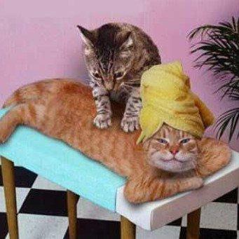 Глисты у кошек и котят. Как избавиться от глистов Кошка 25