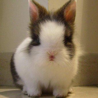 Особенности кроликов: пищеварительная система кроликов