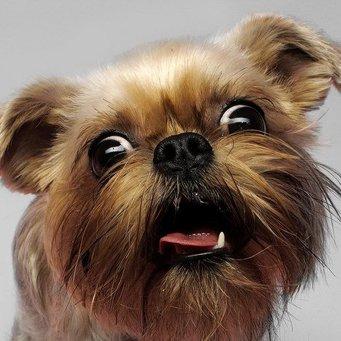 аллергия на белки у собак