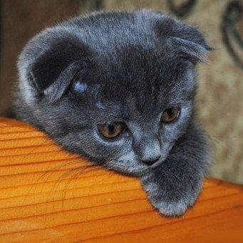 Как котенку сделать родословную 359