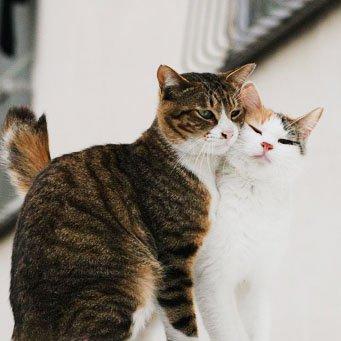 Верность коты