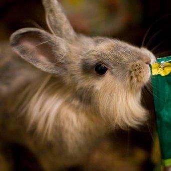 Что делать когда у кролика мокрый нос