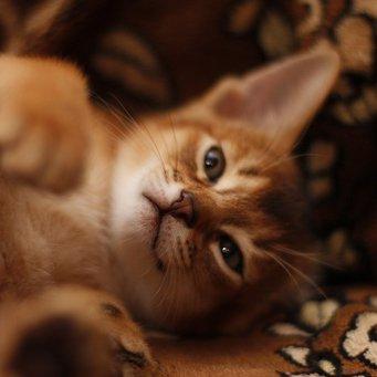 Как сделать приятно кошке
