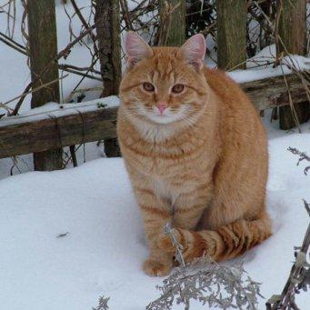 У кота холодные лапы что делать