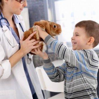 Прививки кроликам лапимун отзывы форум - e