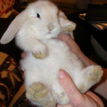 чем лечить кролика от поноса