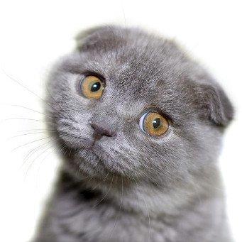 как избавить кота от глистов
