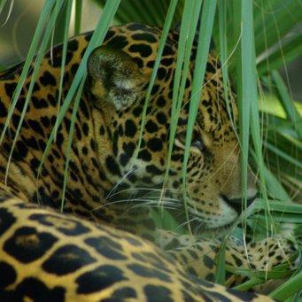 Растения и животные экваториальных