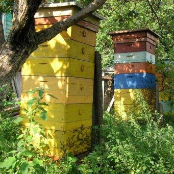 ведение пчел в ульях лежаках