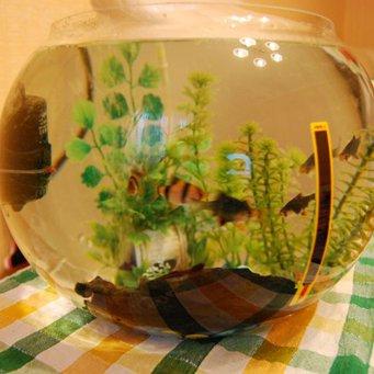 Компрессоры для аквариума своими руками