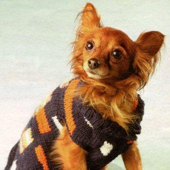 Многие собаководы стараются защитить своих питомцев от холодов, покупая им одежду