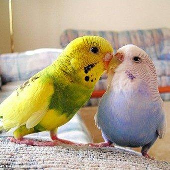 Волнистые попугаи клетки своими руками