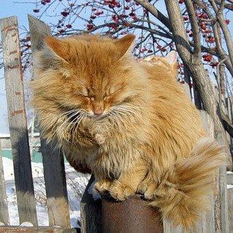 Котенок часто сосет лапу