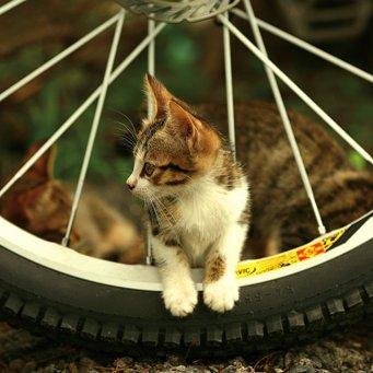 о том, каким именно образом кошки ...