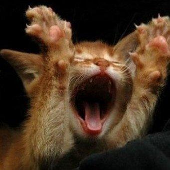Кот сильно кричит