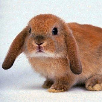 аллергия на мясо кролика симптомы