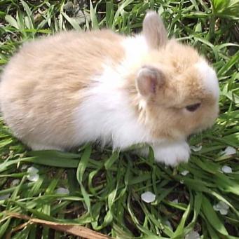 Прививки кроликам лапимун отзывы форум - 08fe2