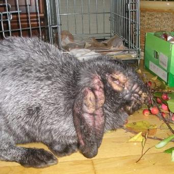Размеры для клеток для кроликов своими руками