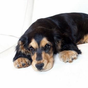 почему мутные глаза у собаки