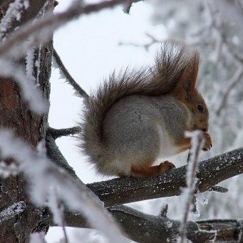 Питание зимой в лесу быть проворнее