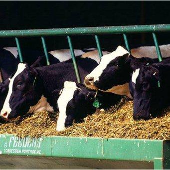 корм для скота ответы