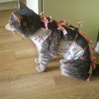 Как кошки переносят стерилизацию