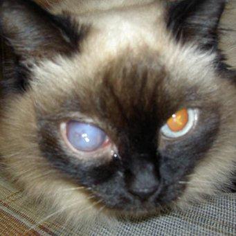 У кота мутный один глаз