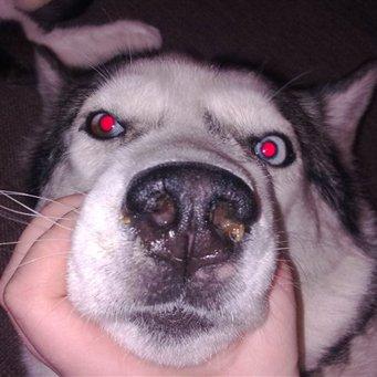 у собаки герпес фото