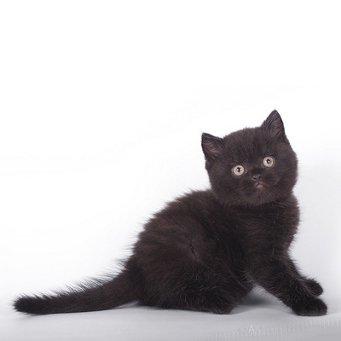 Слезятся глаза у британской кошки: что ...