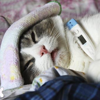 лактусан для кошек инструкция по применению